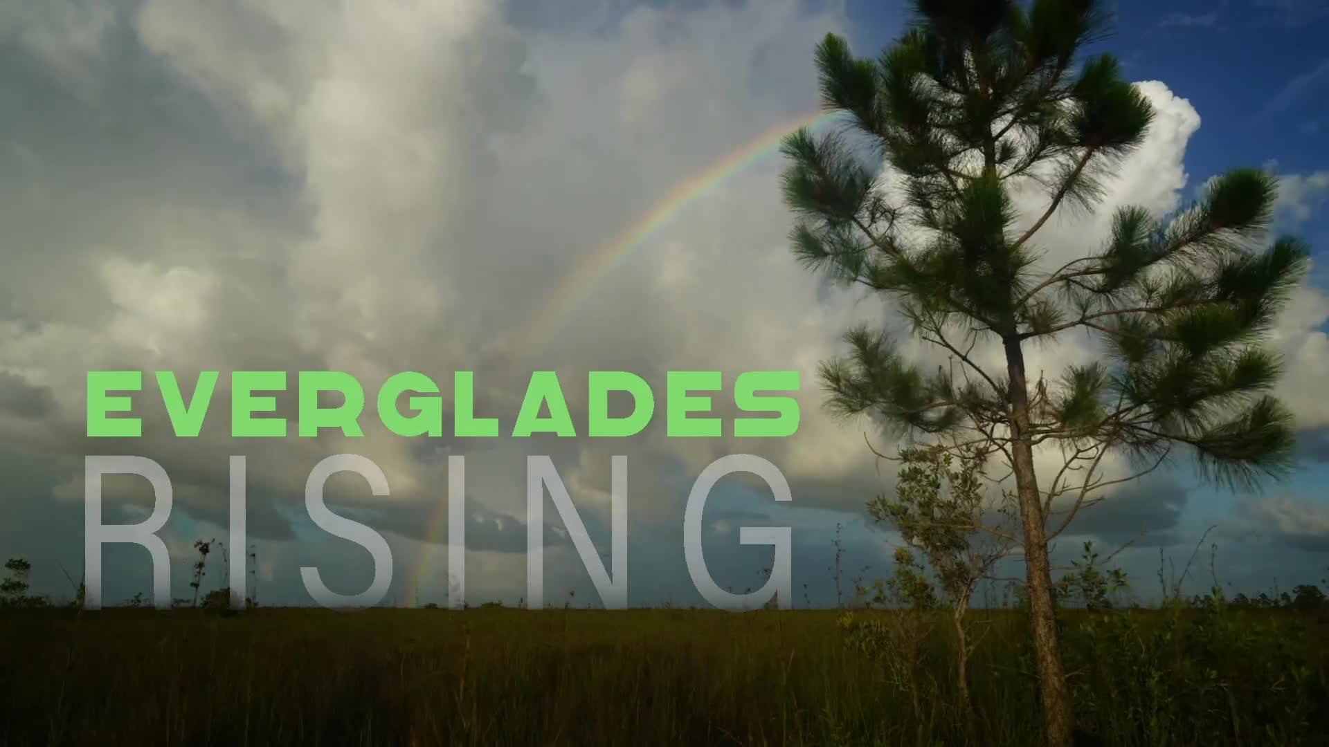 Everglades Rising Film Cover